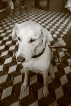 Free Dog Stock Photos - 6733823