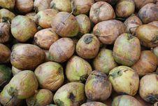 The Fresh Coconut Fruit Background Royalty Free Stock Image
