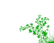 Free Green Foliage Background Royalty Free Stock Photo - 6734145