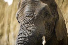 Free Elephant Stock Images - 6734164