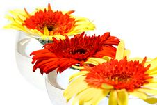 Free Gerberas Stock Photography - 6734342