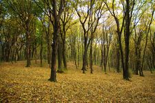 Free Autumnal Forest Stock Photos - 6735143