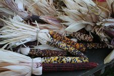 Free Indian Corn Royalty Free Stock Photos - 6735188