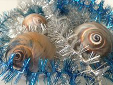 Free Neverita Duplicata &x28;Shark Eye&x29; Sea Snail Shells Between Christmas Tinsel. Stock Photography - 67311352