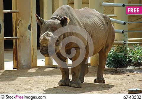 Free Rhino Stock Photography - 6743532
