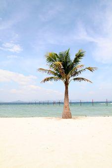 Free Coconut Palm Stock Photo - 6740770