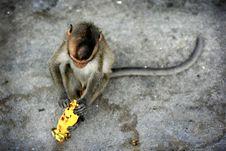 Free Monkey Royalty Free Stock Images - 6740789