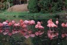 Free Pink Flamingos Stock Image - 6741691