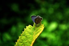 Free The Butterfly On The   Leaves Royalty Free Stock Photo - 6741985