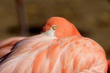 Free Flamingo Stock Image - 6742221