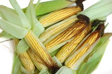 Fresh Corn On The Cob Stock Images