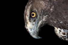 Free Martial Eagle Portrait Royalty Free Stock Images - 6743779