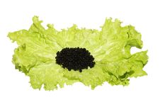 Free Black Caviar  On Lettuce Royalty Free Stock Photography - 6744007