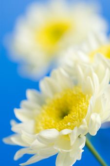 Free Daisies In The Sky Stock Image - 6744341