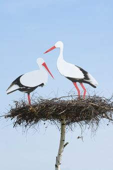 Couple Storks Stock Images