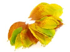 Free November October Autumn Leaf Foliage Fall Leaves Stock Photo - 6744570