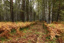 Free Road Through Autumn Wood Stock Image - 6744871