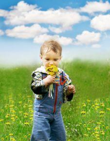 Baby Boy With Dandelions Stock Photos
