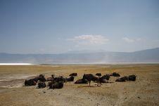 Free Gnu Antelopes Sleeping In Safari Stock Image - 6746781