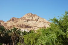 Free Oasis  In  The Negev  Desert Royalty Free Stock Photography - 6747557
