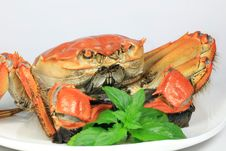 Free Prepared Crab On White Royalty Free Stock Photography - 6747597