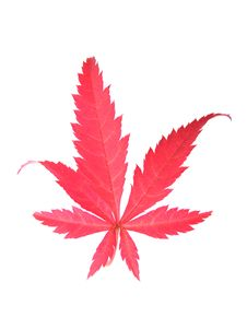 Free Red Leaf Royalty Free Stock Photo - 6748105