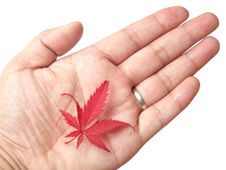 Free Red Leaf In Hand Royalty Free Stock Image - 6748106