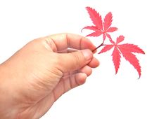 Free Red Leaves In Hand Stock Image - 6748151