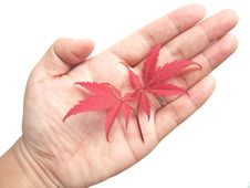 Free Red Leaves In Hand Stock Photo - 6748160