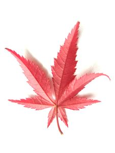 Free Red Leaf Stock Photography - 6748202