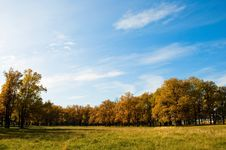 Free Autumn In The Oak Grove Royalty Free Stock Photos - 6748558