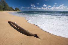 Free Tropical Shoreline Royalty Free Stock Image - 6749426