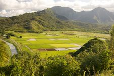 Free Hanalei Valley And Taro Fields Stock Image - 6749961