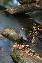 Free Autumn Royalty Free Stock Image - 6754186