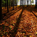 Free Autumn Forest Stock Photography - 6754572