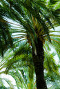 Free Palm Tree Royalty Free Stock Photography - 6754747