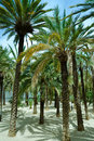 Free Palm Trees Stock Images - 6754754