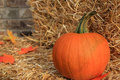 Free Fall Harvest Pumpkin Stock Images - 6757404