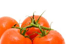 Red Tomatos With Green Branch. Royalty Free Stock Image