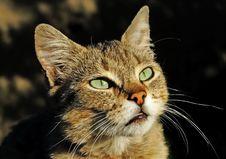 Eyes Of Lady-cat Stock Photos