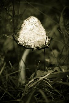 Free Mushroom In The Forest Royalty Free Stock Photos - 6750578