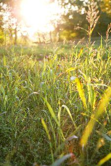 Free Fresh Green Grass Stock Photography - 6750612
