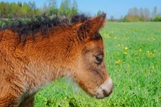 Free Horse Royalty Free Stock Photo - 6750815