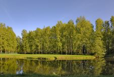 Free Birch Forest Near Pond Royalty Free Stock Photo - 6750945