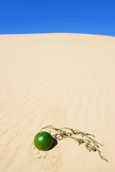Free Desert Royalty Free Stock Photos - 6751408