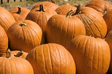 Free Bright Orange Pumpkins Royalty Free Stock Image - 6751466