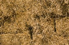 Free Hay Bails Royalty Free Stock Photo - 6751555