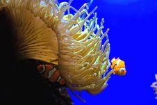 Free Nemo Stock Photos - 6751753
