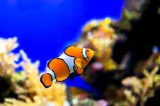 Free Nemo Royalty Free Stock Image - 6751766