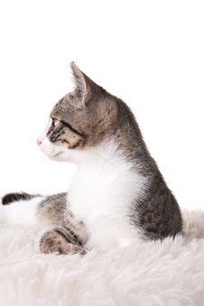 Free Kitten Royalty Free Stock Photos - 6752218